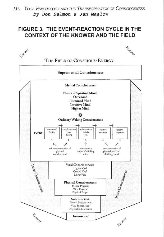 Constitution of Man (2/2)