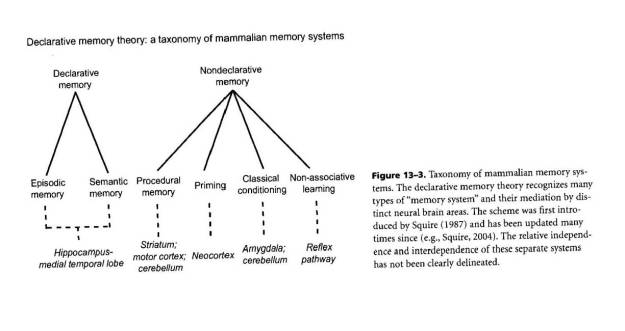 Neurological memory model